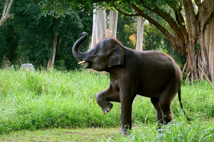 Cute-Elephant-Marching