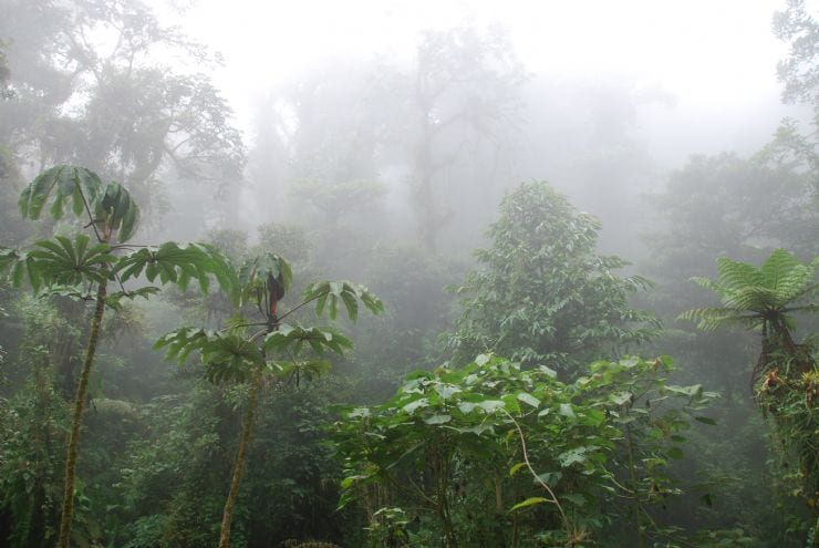 full-perfect-cloudforest-monteverde