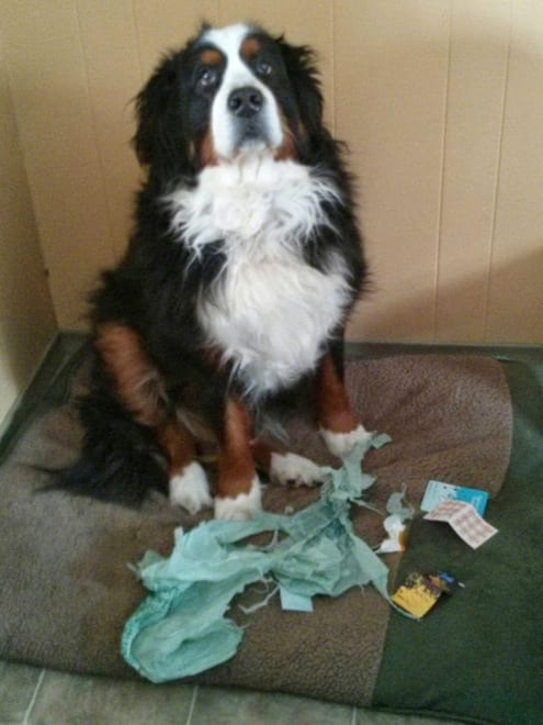 dogs-caught-in-the-act-8