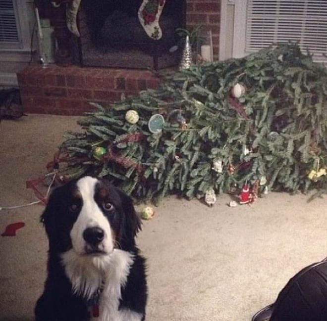 dogs-caught-in-the-act-15