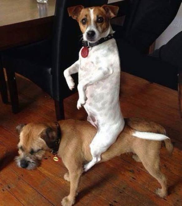 dogs-caught-in-the-act-1