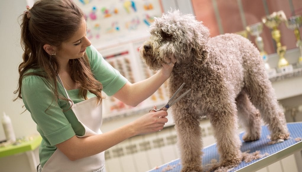 Where-To-Begin-Your-Career-As-A-Pet-Groomer-1021x580