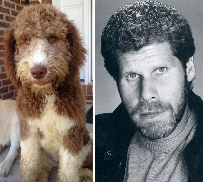 celebrity-look-alikes-animals-431__700