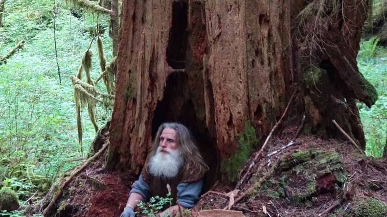The Truth About The Ex Marine Who Lives In A Tree Kiwireport