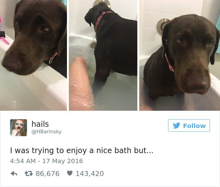 funniest-dog-tweets-2016-1-585a2dc160ad2__700