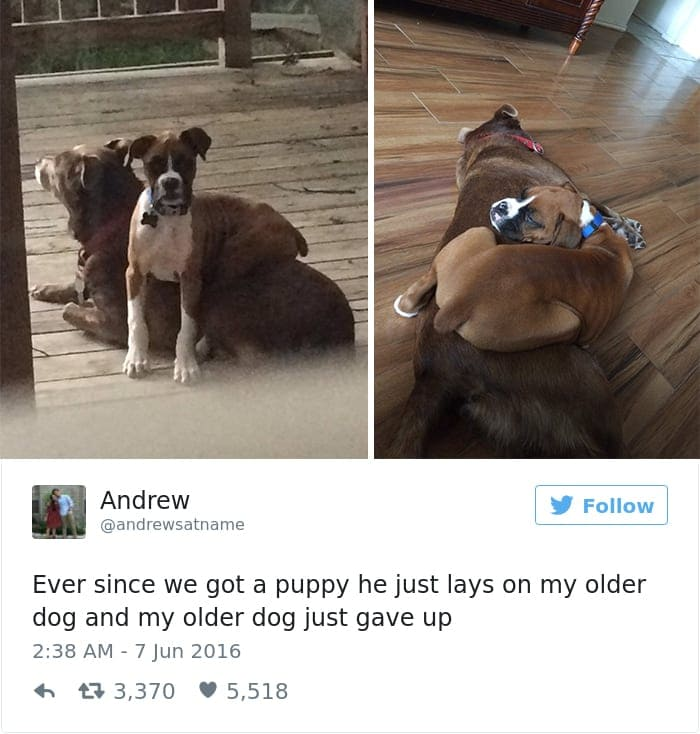 funniest-dog-tweets-2016-6-585a32146cf09__700