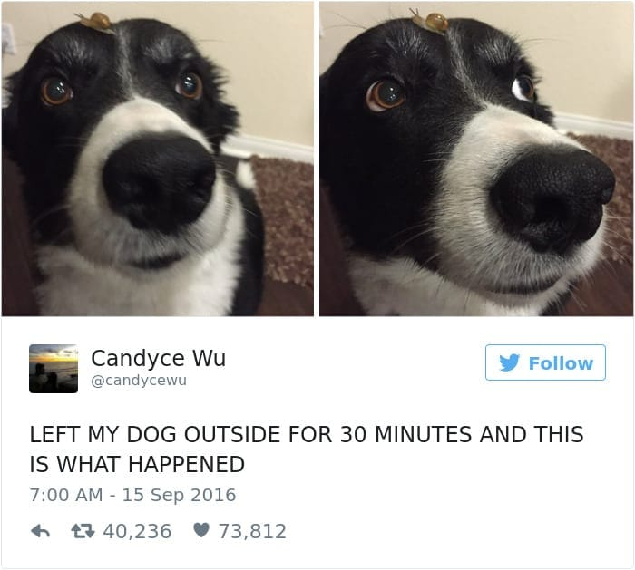 funniest-dog-tweets-2016-4-585a2f68ac4a1__700