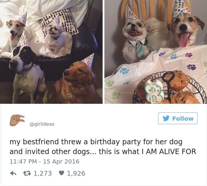 funniest-dog-tweets-2016-13-585a57887b9ab__700