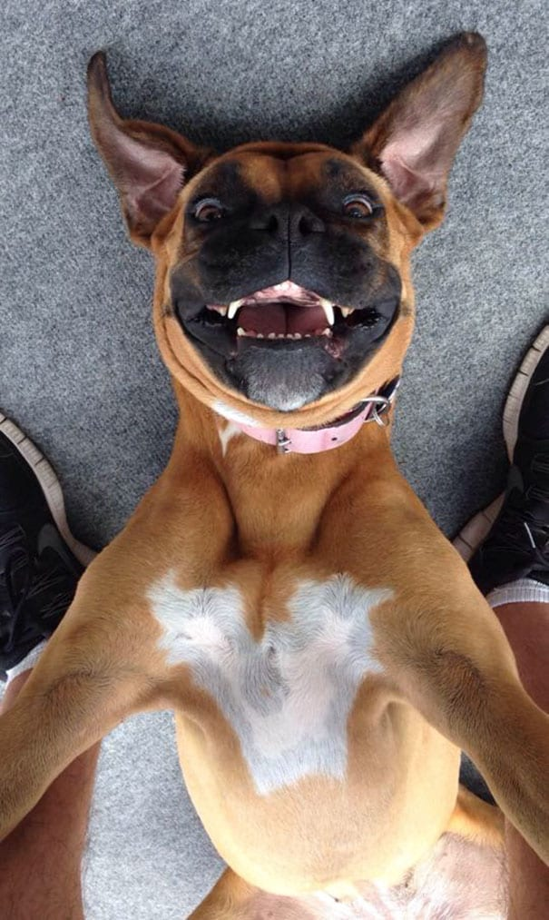 funny-animal-selfies-45-587deb8c97b21__605