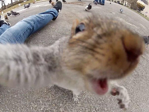funny-animal-selfies-23-587deb5f80b73__605