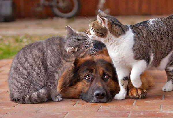 two-cats-and-one-dog