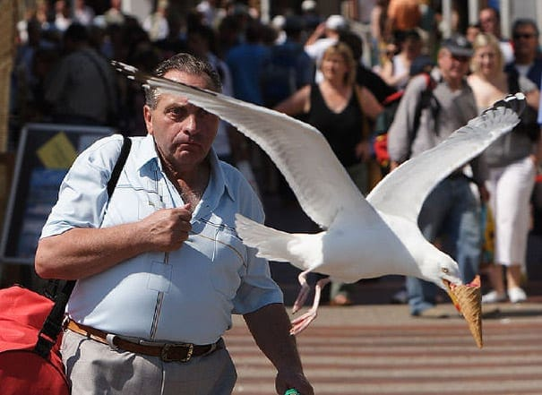 perfectly-timed-photos-19