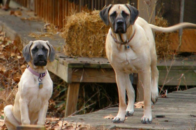 Meet The Most Loyal Dog Breeds In The World | KiwiReport