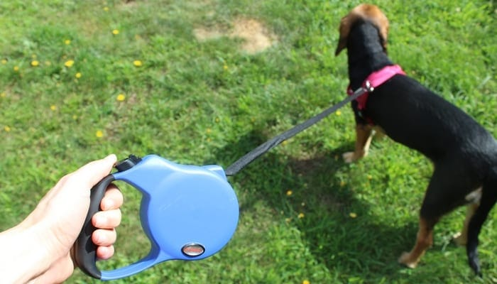 OLLIN-Retractable-Dog-Leash-Review-1