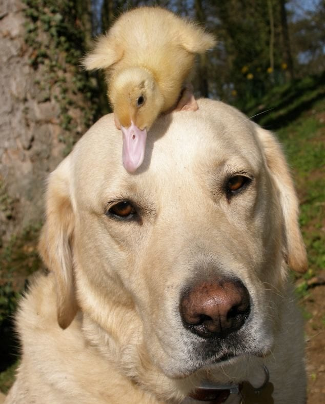 dog and duck