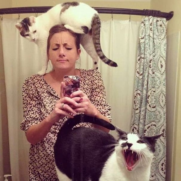 funny-cats-being-jerks-10__605