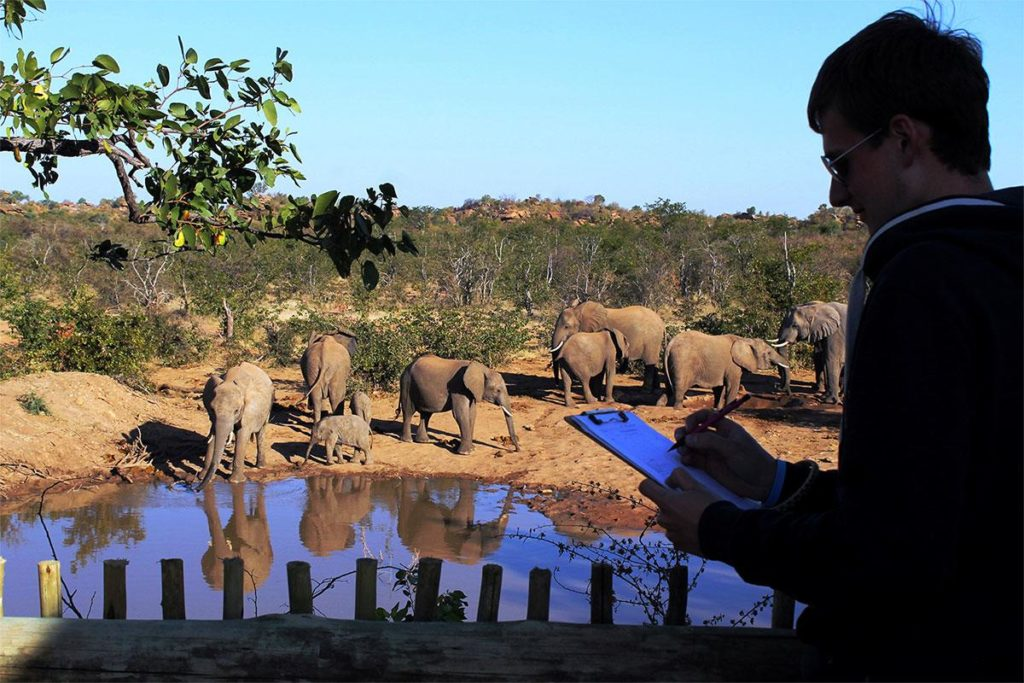 volunteer-elephant-identification.1200