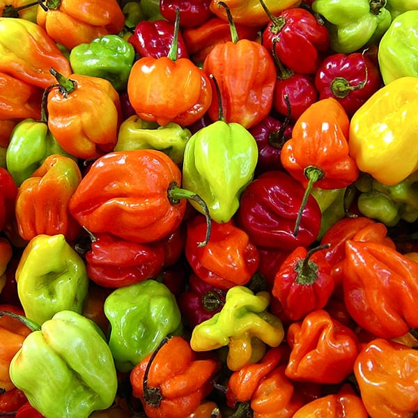 jamaican-hot-peppers1