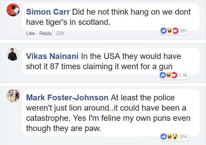 Police face off with tiger ends up hilariously | KiwiReport